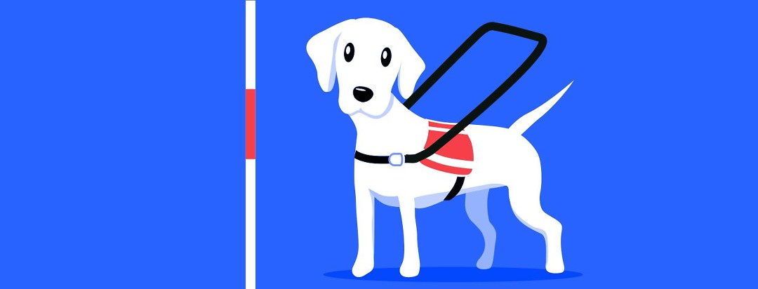 A service dog and a white walking cane.