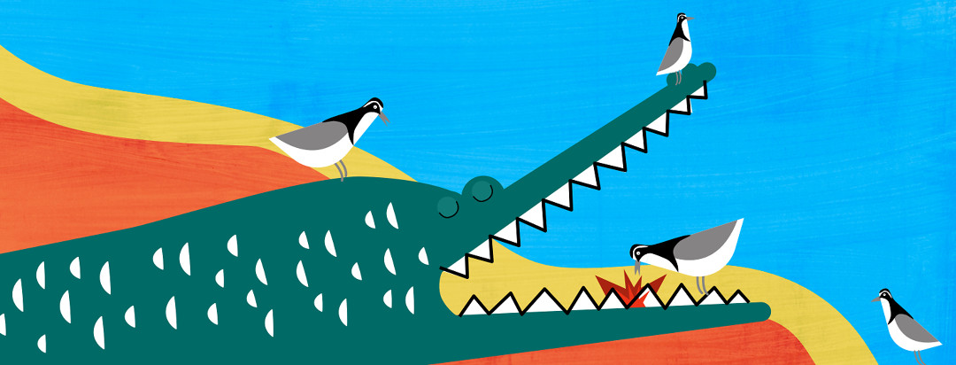 A docile crocodile surrounded by friendly birds that are helping him clean his teeth.