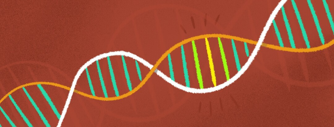 A segment of DNA is highlighted. Genes genetic test strand chromosome.